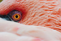 Close-up of a flamingo